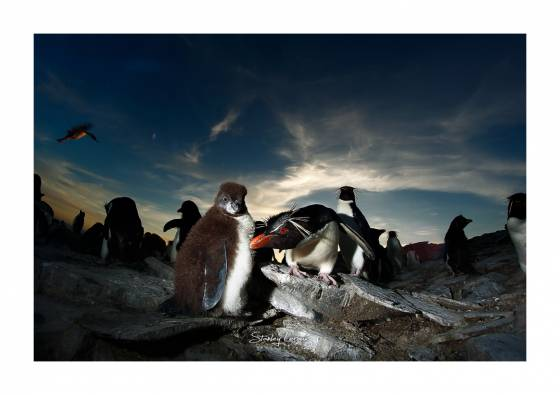 Voyage photo Antarctique Iles Falkland 2