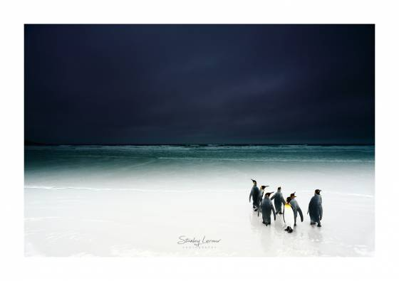 Voyage photo Antarctique Iles Falkland 1