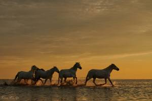 Stage photo en Camargue avec Letsgotravel 3