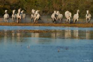 Stage photo en Camargue avec Letsgotravel  6